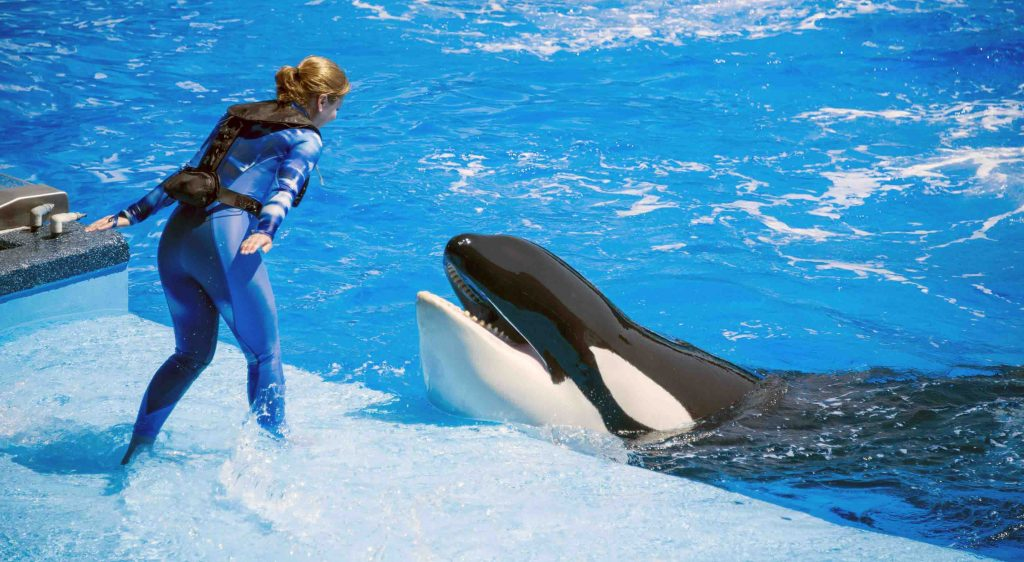 Whale-Sea-show