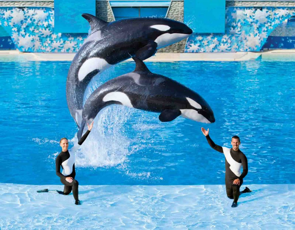sea-world-jumk