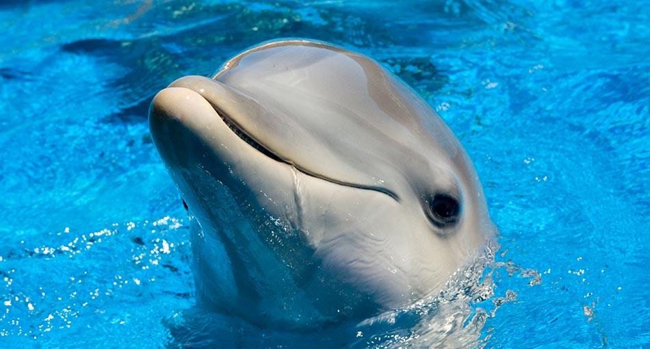dolphin-zone