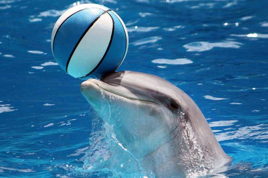 Dolphin-pic