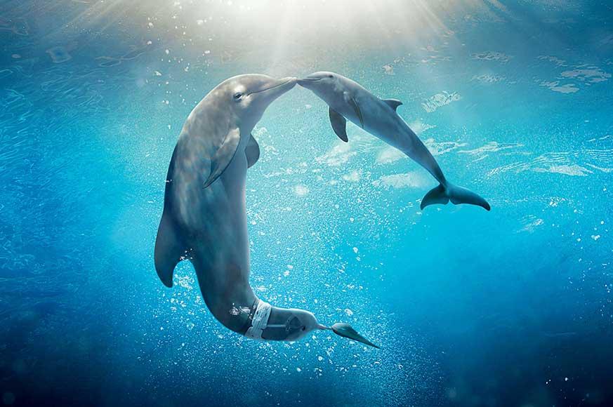 Dolphin-pet-photo