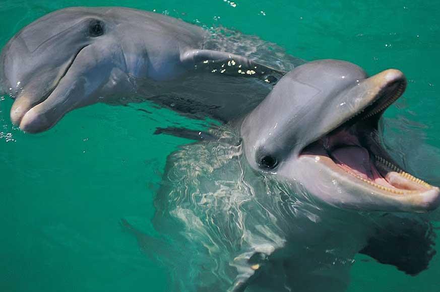 Mainland-dolphin-photo