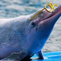 dolphin-image