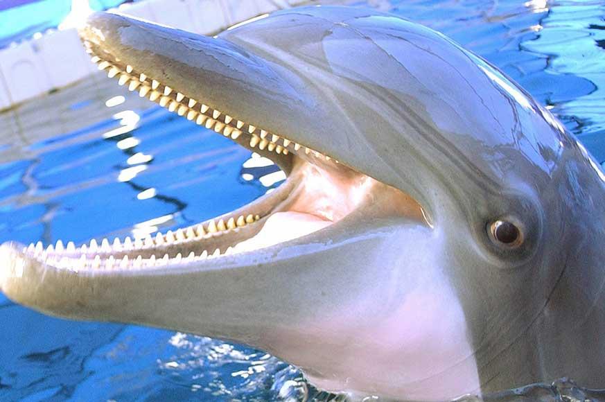 dolphin-photo