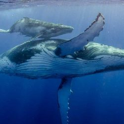 Whale-Conservation